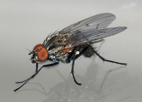 Почему муха чистит лапки?
