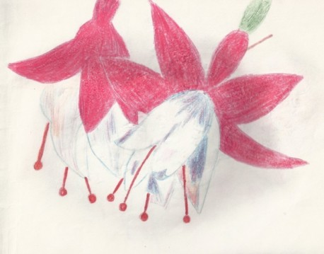 красивые цветы рисунок