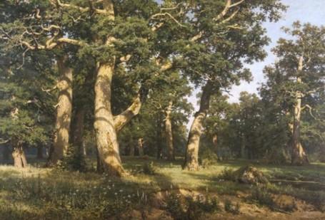 Сочинение по картине И. Шишкина «Дубовая роща»