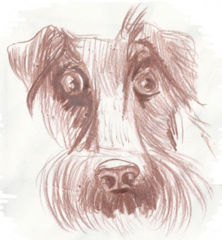 о собаке